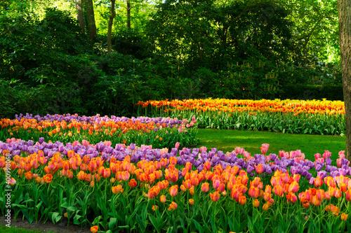 Fotografie, Obraz fresh lawn with flowers
