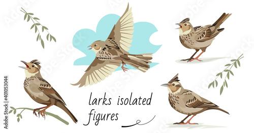 Obraz na plátně Flying, singing, standing, sitting on a branch larks