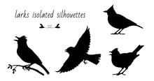 Flying, Singing, Standing, Sitting On A Branch Larks. Isolated Vector Silhouettes