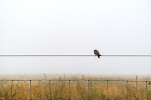 Single Bird On A Wire Over A Field Of Dry Grass And Wild Flowers