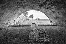 Chien Au Bout D'un Tunel Pudelpointer