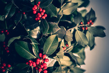 CHRISTMAS MISTLE. Red Mistletoe For A Christmas Wish. Vintage Style Photography