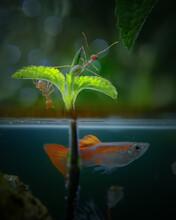 Ant On Leaf With Half Underwater Scene