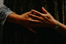 Hands Touching A Old Tree, Sunlight.