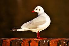 Cute And Beautiful Bird Posing