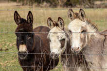 A Group Of Miniature Donkeys Standing Next To A Wire Fence