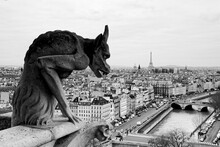Notre Dame Gargoyle In Black And White