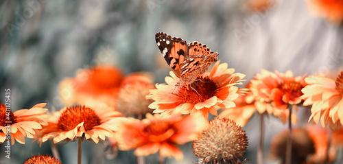 Coriopsis flowers and burdock butterfly Fototapet