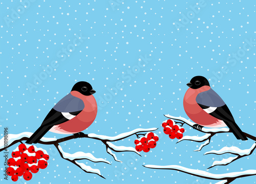 Fotografiet Cute bullfinches sit on rowan branches on a blue background.
