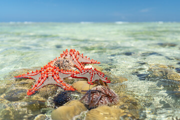 starfish on a reef