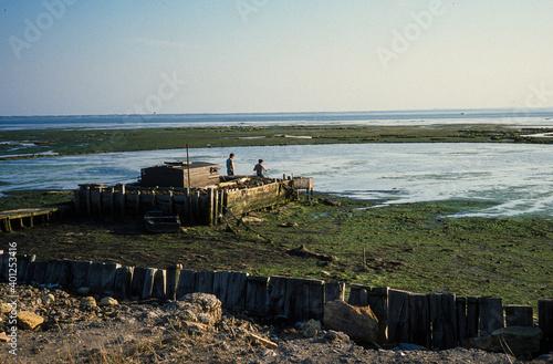Papel de parede tonne, cabane de chasseurs, Bassin d'Arcachon, Landes de Gascogne, 33, Gironde