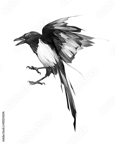 painted bird magpie in flight on a white background Fototapeta