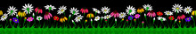 Flowers Field Seamless On Black Background Vector Colorful Illustration