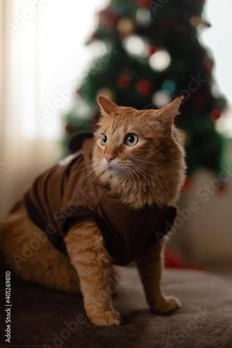 gato con traje de reno en navidad Wallpaper Mural