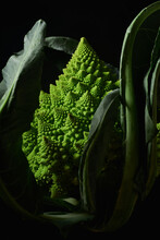Closeup Of Romanesco Broccoli Cabbage On Black Background