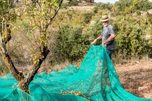 Farmer With Beard And Hat Putting Large Green Mesh While Working In Farm