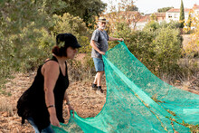 Aged Man And Adult Woman In Casual Outfit Holding Mesh While Picking Nuts In Countryside