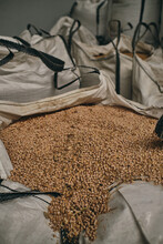 Many Bags With Seeds Of Fresh Wheat Stored In Warehouse In Facility Of Factory