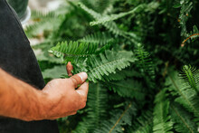 Crop Unrecognizable Man With Tan Touching Branch Of Green Fern In Garden At Daytime