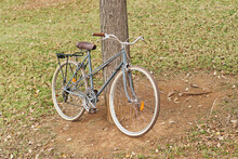 Old Fashioned Bicycle Parked Near Tree In Urban Garden On Cloudy Day In Autumn