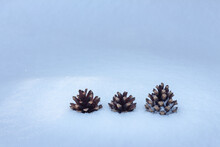 Three Pine Cones In Snow