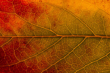 Macro Background Of Colorful Autumn Dry Leaf