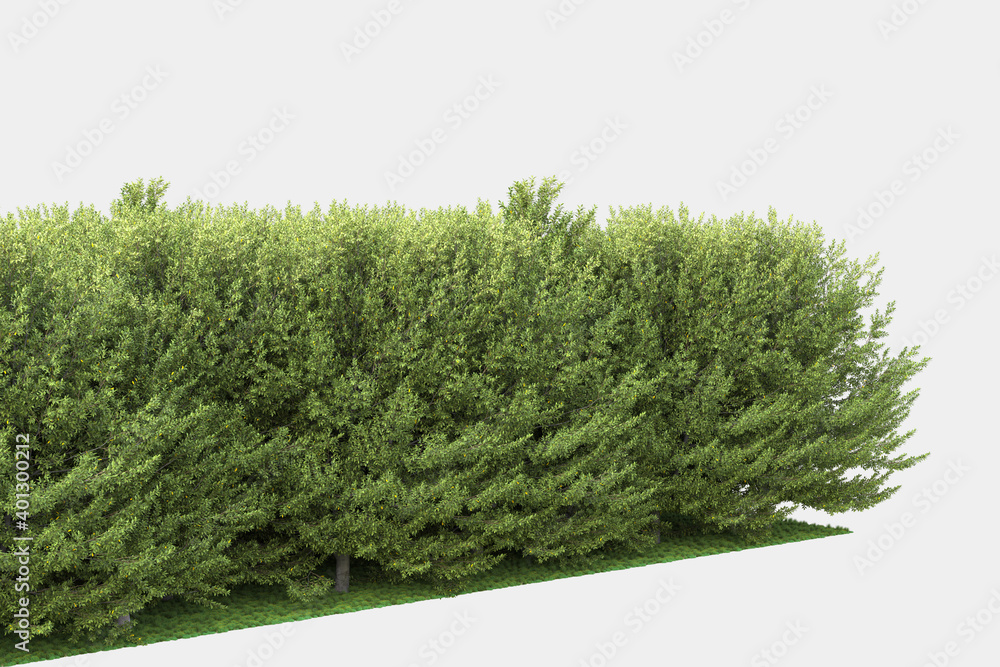 Fototapeta Background illustration of green woods and grass. 3D rendering. Useful for commercial banners and print