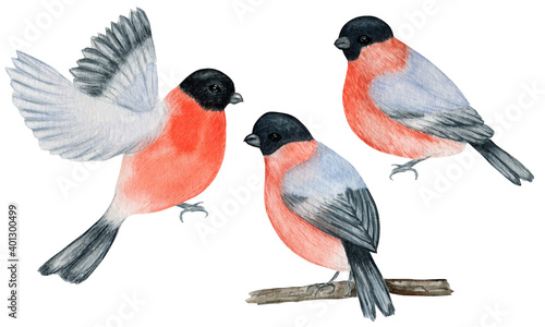 Canvastavla Watercolor bullfinch Christmas bird set