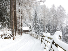 Scenic View From The Mountain Road During Snowfall  Near Telves,  Sterzing,  South Tyrol, Dolomites, Southern Limestone Alps,  Northern Italy.