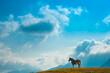 秋の阿蘇の原野に放牧された馬【熊本県】