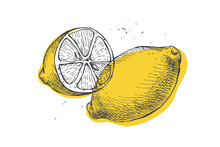 Drawn Citrus Fruit Lemon. Dessert Fruits, Whole, And Cut. Organic Food Concept. It Can Be Used As A Decorative Element For Markets, Menus, And Packaging. Vector Botanical Illustrations.