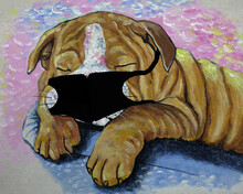 Oil Paintings Of Cute Bulldog   Scared Of COVID Must Wear Masks Every Time.