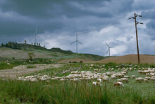 Wind Turbines In Rolling Foothills Flocked With Sheep