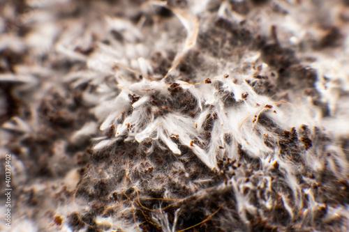 Valokuva Grow Magic mushroom