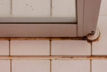Black Mold On The Tiles In The Shower Room.aspergillus
