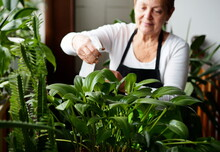 Active Senior Woman Watering Houseplants In The Winter Home Garden. Crop And Floriculture. Blurred Image.