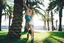 Strong Woman Doing Handstand Exercise Near Palm Tree
