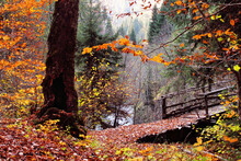 The Magical Colors Of Autumn In The Forest Of Svaneti