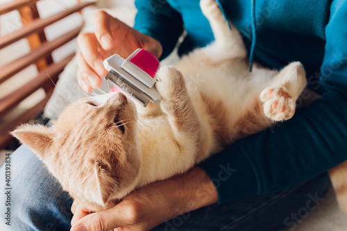 Fotografia Tabby cat lying on the table at cats hairdresser's salon while being brushed and combed