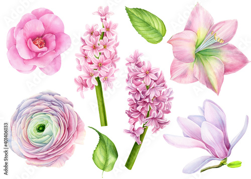 Set of watercolor flowers, magnolia, camellia, amaralis, hyacinth, ranunculus on Fototapeta