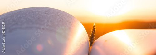Open book pages at sunset or sunrise sunlight with wheat spike Fototapet