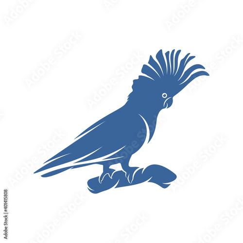 Obraz na plátně Cockatoo Bird design vector illustration, Creative Parrot Bird logo design conce