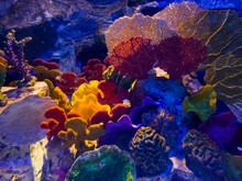 Various Decorative Corals In A Colorful Atmosphere