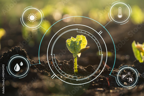 Billede på lærred Plant sprout growing in soil with icon energy sources on a picture for environmental or smart farm concept