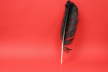 Black Bird Feather On Red Background