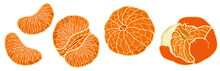 Vector Illustration. Hand Drawing Tangerines. Tangerines Without Peel. Citrus Slices.