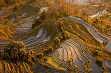 Aerial View Of Terraced Fields