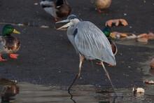 Birds At Sunset In The Carpinteria Bird Refuge