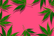 canvas print picture - Flat composition with hemp leaves on a pink background, top view on background. minimal concept. creative copyspace