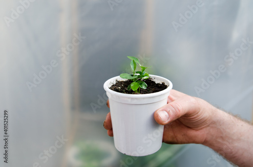 Canvas-taulu Farmers hands holding orange in plastic cup during morning time food